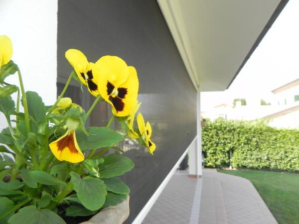 ZIPPY QUEEN la Soluzione ideale per la chiusura di terrazzi, balconi e tende a rullo di grandi dimensioni